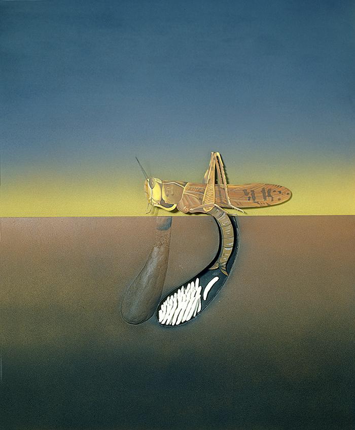 Le criquet,1983,plywood,plaster,acrylique,113x100cm