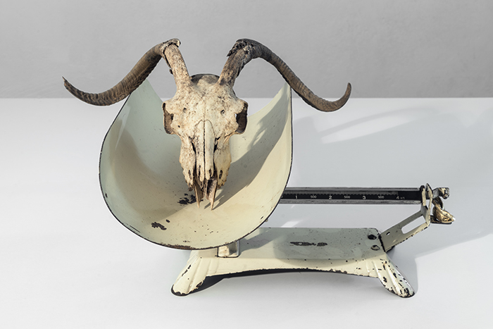 Untitled, 2016 scale for babies, skull of goat, human ear mold 36 x 57 x 49 cm